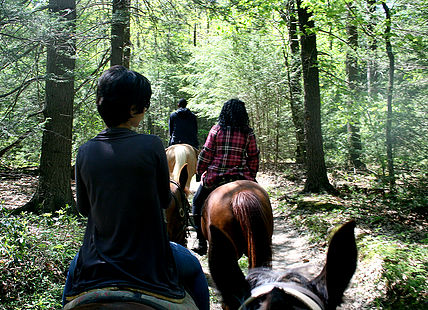 Trail ride through the woods.